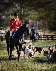 Deep Run Hunt Club celebrates 125 years and the future of foxhunting. Hunting Photography, Horse Photography, Deep Run, Hunt Club, Fox Hunting, The Fox And The Hound, Horse World, Hunter Jumper, Equestrian Style