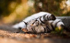cute cat Wallpaper HD Wallpaper