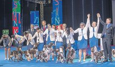 Talented breeders celebrate in #Finland by Simon Parsons #dogs #dogshows #dogshowing