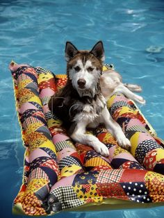 Dog Floating on Raft in Swimming Pool Photographic Print by Chris ...