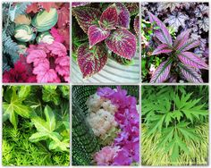 Yummy Combinations: Adding Texture to your Landscape via The Personal Garden Coach.