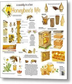 Honey Bee Facts, Bee Safe, Bee Activities, Bee Pictures, Raising Bees, I Love Bees, Mini Farm, Beneficial Insects, Aluminium Sheet