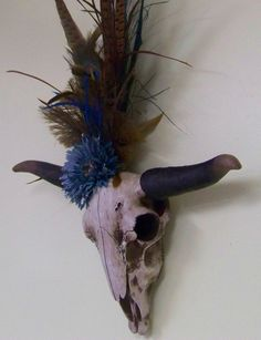 Hey, I found this really awesome Etsy listing at https://www.etsy.com/listing/178587838/taxidermy-longhorn-skull-decorated-skull
