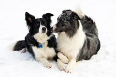 Dog Heat Cycle Signs [Slideshow]