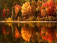As cores do outono são inigualáveis.