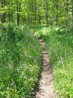 Two weeks on the Appalachian trail - would love to attempt a thru hike but that's probably overly ambitious.  I think I would like to hike through Tennessee and the Great Smoky Mountains.
