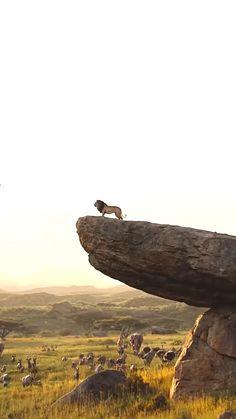 Lion King Video, Lion King Movie, Lion King Art, Disney Lion King, Lion King Pictures, Lion Images, Beautiful Scenery Pictures, Beautiful Nature Scenes, Lion Live Wallpaper