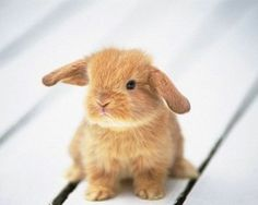 Best Pet Rabbit breeds for beginners and kids: get males (they don't nest as they age nor become as territorial); fix them before 6months of age; big breeds are Flemish Giant or English Lop and small breeds are Netherland Dutch -about 5lbs- a Mini Lop-Dwarf Cross -about 2 to 4 lbs.