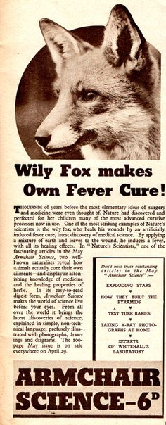 theurbanfoxwatcher:    Here's an interesting ad I found in one of my dad's old magazines.  It comes from Animal and Zoo Magazine, May 1939, and mentions new research on how animals such as foxes use natural remedies to cure their ailments. No wonder foxes are so good at healing after nasty injuries!  Never actually heard of foxes doing this before, but it'd be interesting to try and find the original article from Armchair Science.