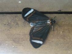 una tarde, yo agarre una mariposa y la mande por tu ventana:: *_*