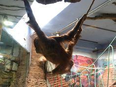 А на обезьяну гравитация не очень действует