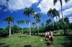 horseback riding in the dominica republic. In galop het pad af.