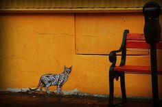 gray tabby cat -  street art in Reykjavík, Iceland