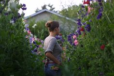 Erin of Floret Flower Farm shares her tips for growing sweet peas. Hands down one of the best series of gardening posts I've read. Check it out!