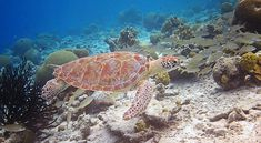 Bonaire Snorkeling - How Good Is It?
