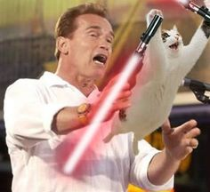 Arnold Schwarzenegger tries to catch a lightsaber cat