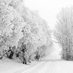 Bijna alles ziet wit van de sneeuw in dit Zweedse bos. Het geeft een bijzonder beeld. #sneeuw #Zweden #bos #winter