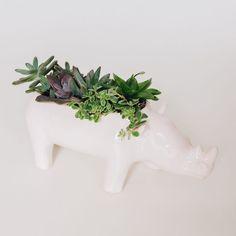 Vaso Rhino | Storehouse Home Decor