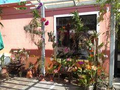 Naples Botanical Garden..orchid display. Bonita Beach, Naples, Botanical Gardens, Orchids, Display, Plants, Floor Space, Billboard, Plant