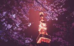 cherry blossom tree at night wallpaper - Google Search