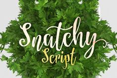 Check out Snatchy by artimasa on Creative Market