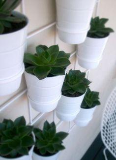 Tiny pots of succulents!