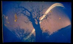 Spiraculo Retondo: The dead tree solargraphy