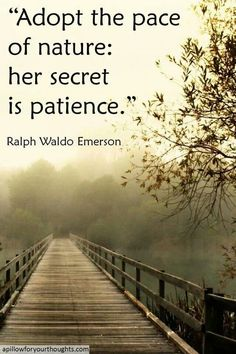 Like this. Patience is so important.