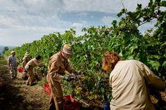 Vineyards in Montalcino #tuscany
