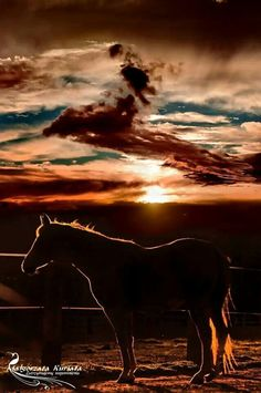 Horse in the most gorgeous falling sunset! Amazing horse photography! Wild wild west! Please also visit www.JustForYouPropheticArt.com for colorful, inspirational art and stories and like my Facebook Art Page at www.facebook.com/Propheticartjustforyou Thank you so much! Blessings!