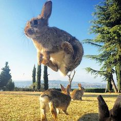 Flying rabit Photo by @emmebi420 by fantastic.colours