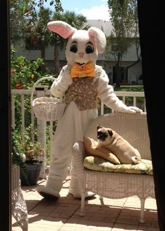 Easter Bunny visits Koko the Pug---2013