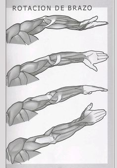 Rotación de brazo.