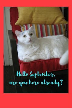 Hello September purrfect time to start new routines for your cat. Exercise, new feeding routine, games?