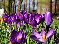 U nas mróz, a tam już wiosna - zobacz zdjęcia