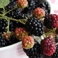 Ostružinový likér recept - Vareni.cz Kimchi, Blackberry, Smoothie, Fruit, Cooking, Food, Syrup, Kitchen, Essen