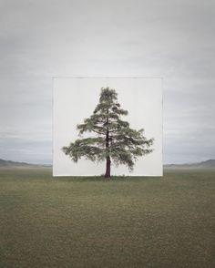 La Nature encadrée par Myoung Ho Lee (7)