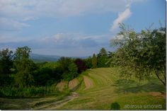 Collio is a small part of Friuli Venezia Giulia region, Italy.  See more images on my post.