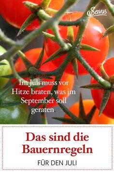 """""""Im Juli muss vor Hitze braten, was im September soll geraten."""" Aus überlieferten Naturbeobachtungen lassen sich oft Rückschlüsse auf das kommende Wetter ableiten. #garten #gartentipp #gartentipps #gartenarbeiten #natur #gartenliebe #meingarten #pflanzen #gartenzeit #gartenarbeit #gartenblog #gartengestaltung #natur #gartenfreude #gartenpflege #meingartenreich #naturgarten #gartenideen #gartenidee #servus #servusmagazin #servusinstadtundland #wetter #bauernregel #bauernregeln #bauernkalender September, Yard Maintenance, Natural Garden, Weather, Roast, Plants"""