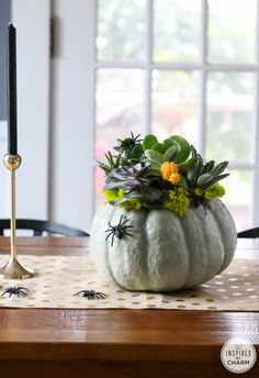 DIY Pumpkin Succulent Planter  go from Halloween to thanksgiving...
