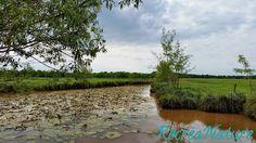 RécréaNature : Promenade Angevine pour la Fête de la Nature - Ouverture 2015 de la Maison de l'Ile Saint-Aubin