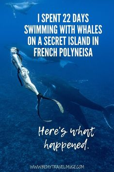 Solo Travel Tips, I Want To Travel, Humpback Whale, French Polynesia, Getting To Know You, New Adventures, Dreaming Of You, Whales, 3 Weeks