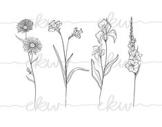 July Birth Flower, Birth Month Flowers, Wessel, Daffodil Tattoo, Daffodils, Moose Art, Side, Peircings, Black And White