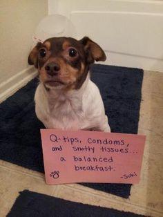 «Cotton fioc, preservativi e fazzoletti, una colazione equilibrata» (Dogshaming.tumblr.com)