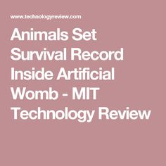 Animals Set Survival Record Inside Artificial Womb - MIT Technology Review