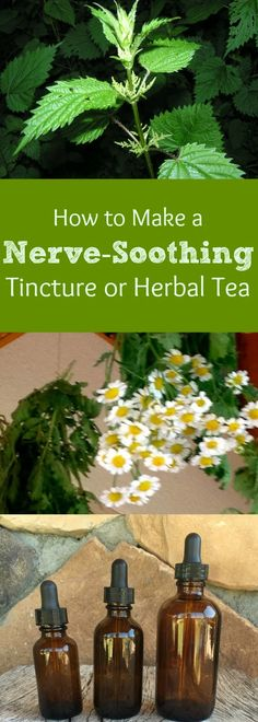 "Ever just had ""one of those days?"" It seems they happen pretty frequently during this increasingly busy time of year. Here is an easy and effective tincture you can make to soothe your nerves! There are only three herbs in it, and it tastes pretty good, too. In addition, if you happen to be a sufferer of migraine headaches, there is evidence that the herbs in this tincture is thought to help out with those! By the way, this herbal combination also makes an easy delicious tea, if you prefer t"