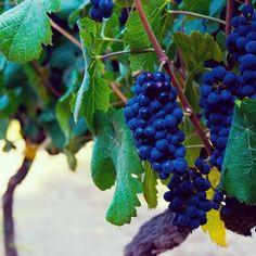 Los vinos de excelente calidad que ofrece Vinos Nobles provienen de viñedos de Chile, Argentina, Italia, USA, Australia y España...