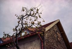 bare apple tree Fuji GW690III 6x9  Lomography 400 bokeh bokehlicious apple tree fruit house clouds sky rural film analog filmisnotdead buyfilmnotmegapixels fuji gw690 gw690iii 6x9 mediumformat 120 lomography color 400 depth