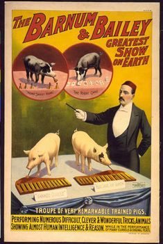 circus, animal poster, wildlife, vintage, vintage posters, retro prints, classic posters, free download, graphic design, The Barnum & Bailey Greatest Show on Earth, Troupe of Very Remarkable Trained Pigs - Vintage Circus Animal Poster