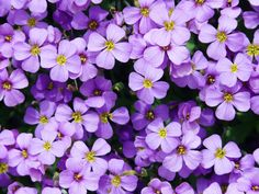 Types of Flowers - 170 Flower Names Pictures Exotic Flowers, Purple Flowers, Greek Blue, Name Pictures, Engagement Party Decorations, Flower Names, Ornamental Plants, Types Of Flowers, Blue Pillows